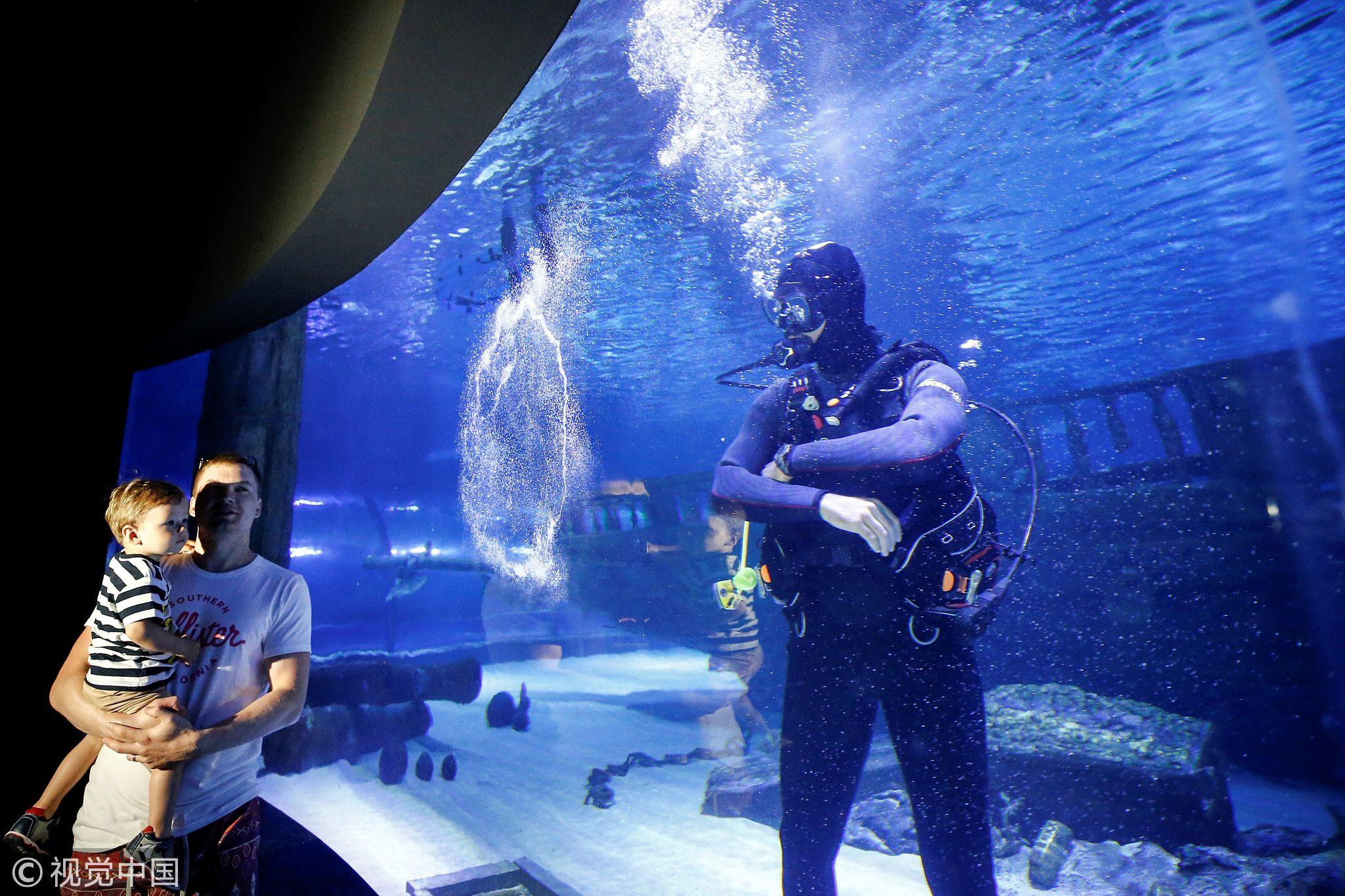 土耳其潜水员畅游131米海底隧道 与鲨鱼共舞