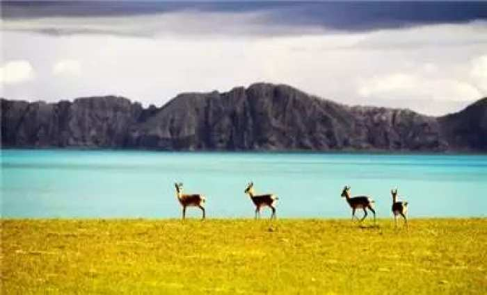 5 青海省气候中心预测,今年汛期,可可西里较历年(1981年至2010年)