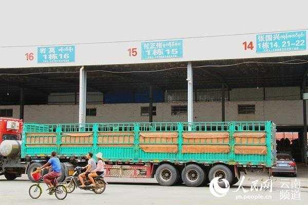 中缅跨境农业 水涨荷花高