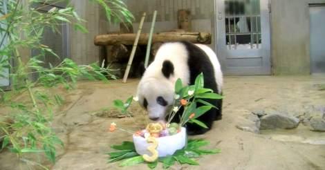 3只旅日熊猫租借期将满,日本东京请求延期