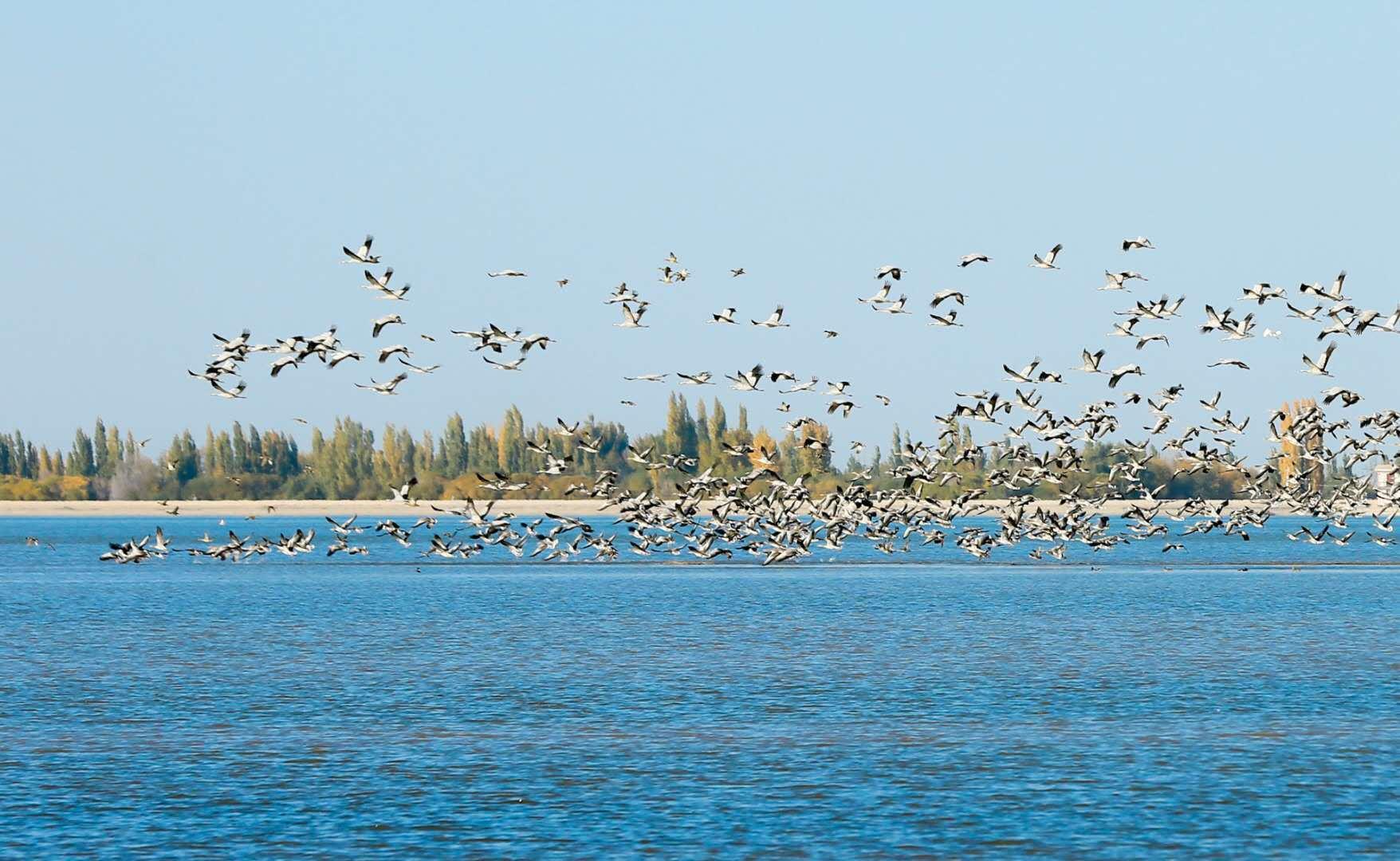 呼图壁县:金秋湿地生态美