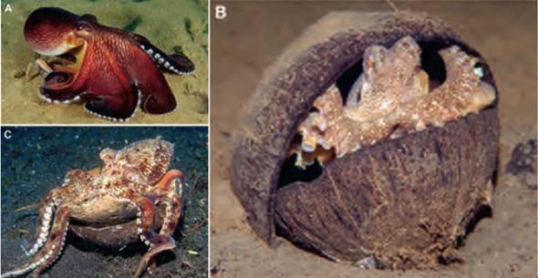 科学|章鱼可能不是地球鱼?这是怎么回事?
